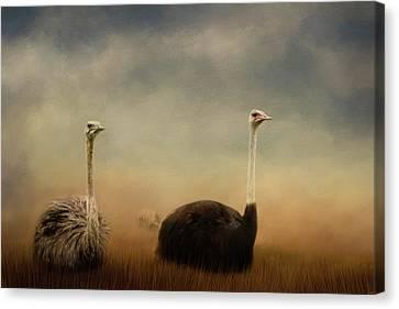 Ostrich Canvas Print - Ostrich Couple by Jai Johnson