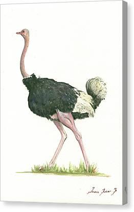 Ostrich Canvas Print - Ostrich by Juan Bosco