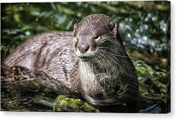 Otter Canvas Print by Martin Newman