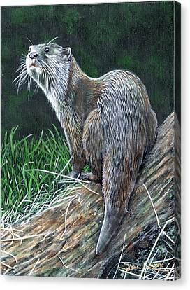Otter On Branch Canvas Print
