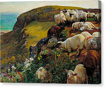 Our English Coasts Or Strayed Sheep Canvas Print by William Holman Hunt