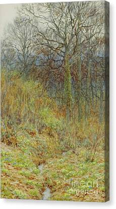 Our Primrose Wood, 1913  Canvas Print
