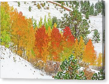 Our Winter Begins Around Mid October.  Canvas Print by Bijan Pirnia