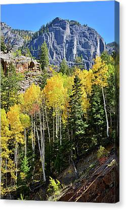 Canvas Print featuring the photograph Ouray Aspens by Ray Mathis