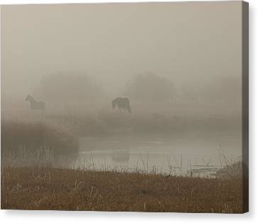 Out In The Fog Canvas Print by DeeLon Merritt