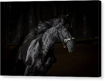 Out Of The Darkness Canvas Print