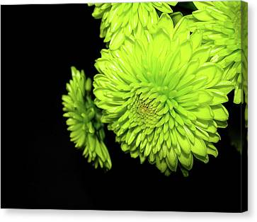 Out Of The Darkness Canvas Print by Randy Rosenberger