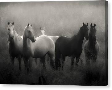 Horse Canvas Print - Out Of The Mist by Ron  McGinnis