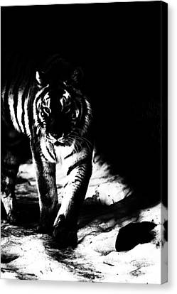 Out Of The Shadows Canvas Print by Karol Livote