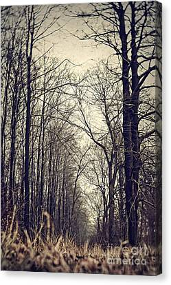 Out Of The Soil - Into The Forest Canvas Print