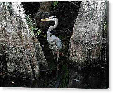 Out Standing In The Swamp Canvas Print