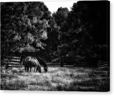Canvas Print featuring the photograph Out To Pasture Bw by Mark Fuller