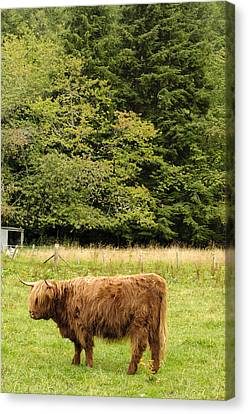 Canvas Print featuring the photograph Out To Pasture by Christi Kraft