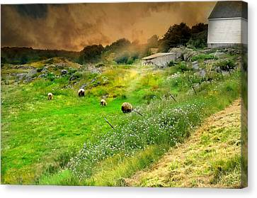Out To Pasture Canvas Print by Diana Angstadt