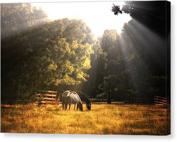 Canvas Print featuring the photograph Out To Pasture by Mark Fuller