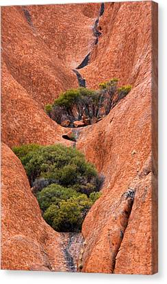 Gum Trees Canvas Print - Outback Oasis by Mike  Dawson