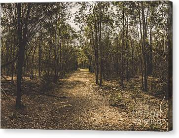 Outback Queensland Bush Walking Track Canvas Print by Jorgo Photography - Wall Art Gallery