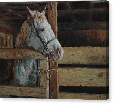 Horse Stable Canvas Print - Outdoor Girl by Jim Clements
