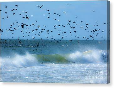 Outer Banks Birds Over Crashing Waves Canvas Print