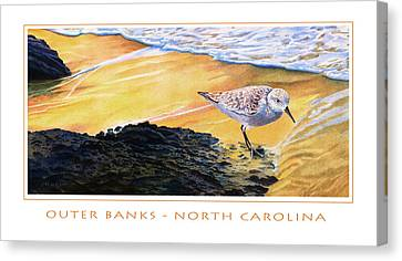Outer Banks Sanderling Canvas Print by Bob Nolin