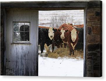 Outside Looking In Canvas Print