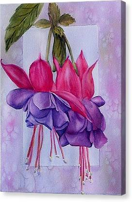 Outstanding Fuschias Canvas Print by Sue Chorney