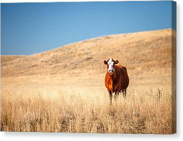 Outstanding In Her Field Canvas Print by Todd Klassy
