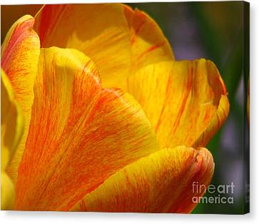 Outstretched Canvas Print