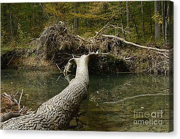 Canvas Print featuring the photograph Over On Clover by Randy Bodkins
