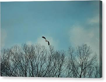 Over The Treeline Canvas Print by Jai Johnson