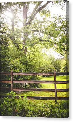 Canvas Print featuring the photograph Overgrown by Shelby Young