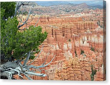 Canvas Print featuring the photograph Overlooking Bryce Canyon by Bruce Gourley