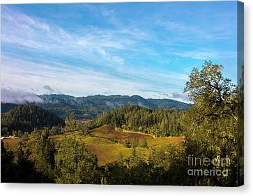 Overlooking The Vineyard Canvas Print