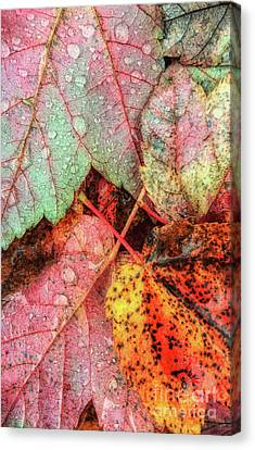 Overnight Rain Leaves Canvas Print by Todd Breitling