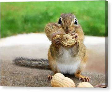 Squirrel Canvas Print - Overstuffed by Lori Deiter