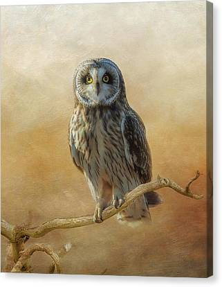 Canvas Print featuring the photograph Owl  by Angie Vogel