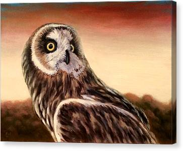 Owl At Sunset Canvas Print