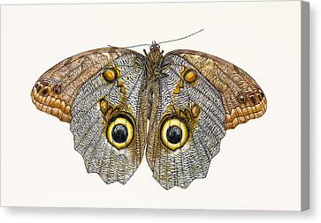 Owl Butterfly Canvas Print by Rachel Pedder-Smith