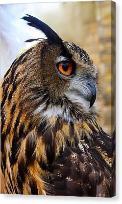 Owl-cry Canvas Print
