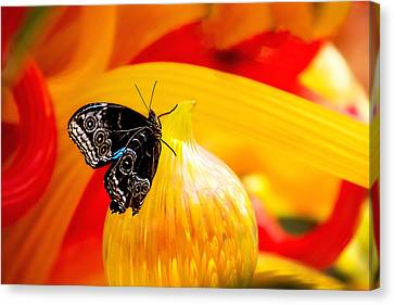 Owl Eye Butterfly On Colorful Glass Canvas Print by Tom Mc Nemar