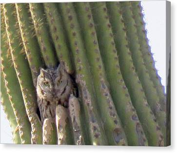Owl In Cactus Burrow Canvas Print