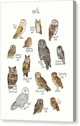 Educational Canvas Print - Owls by Amy Hamilton