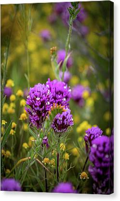 Canvas Print featuring the photograph Owl's Clover by Peter Tellone