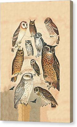 Owls Canvas Print by Eric Kempson