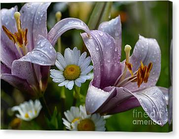 Ox-eye Daisy And Lily Canvas Print