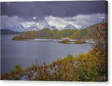 Jackson 5 Canvas Print - Oxbow Bend Fall Snowfall by Scott McGuire