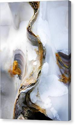 Canvas Print featuring the photograph Oyster by Richard George