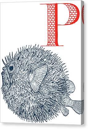 P Puffer Fish Canvas Print by Thomas Paul