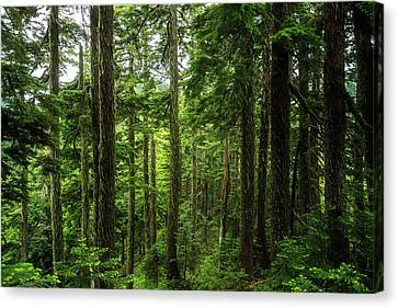 Pacific Northwest Forest Canvas Print