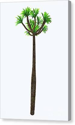 Pachypodium Lamerei Tall Tree Canvas Print